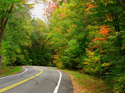 Forest Home Rd - downhill and into a right