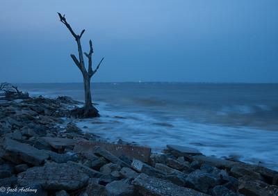 Early morning at Driftwood Beach, Jekyll Island, Georgia