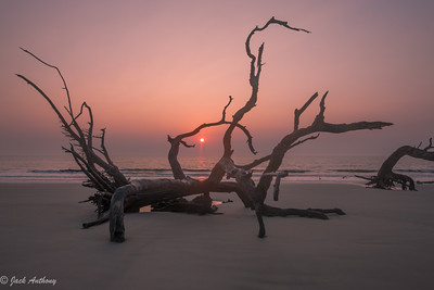 Sunrise at Driftwood Beach, Jekyll Island
