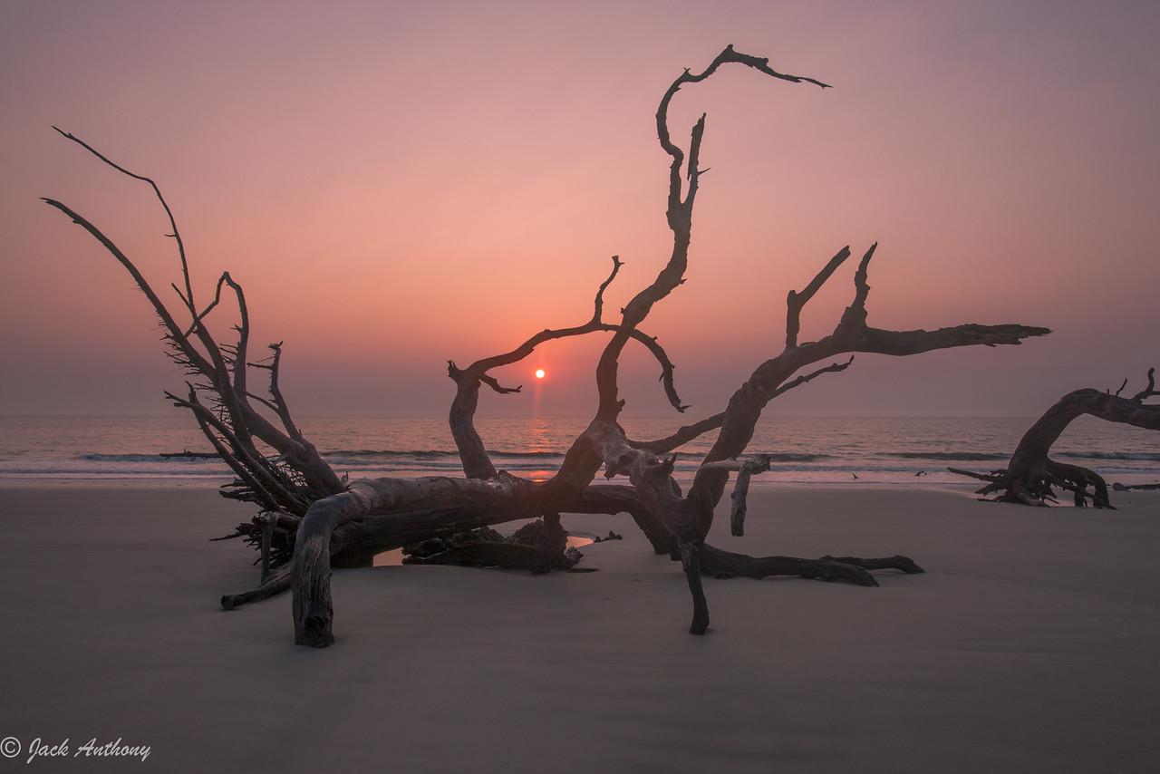 Sunrise at Driftwood Beach, Jekyll Island