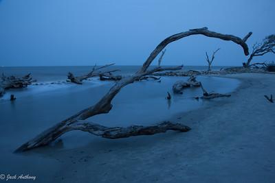 Early morning on Driftwood Beach, Jekyll Island, Ga.