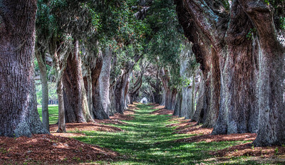 Avenue of the Oaks, St Simon, Ga.