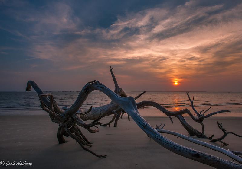 Driftwood at St. Andrews Beach, Jekyll Island