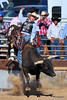 Bull rider<br /> Best viewed X+<br /> <br /> Another in the Kingman rodeo series, I was amazed at the power of the bull and the stamina of the rider.  The rider just before this one took a bad fall and needed medical assistance.  But this cowboy hung on and gave that bull a heckuva ride.