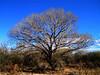 San Pedro Riparian Area, AZ nov 25, 2006a 059a