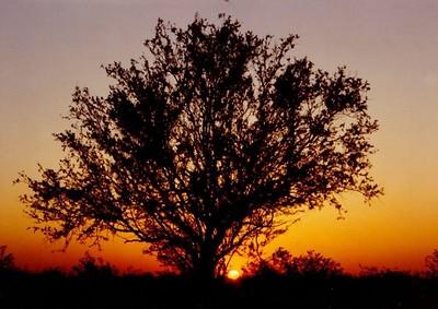 sunset, mesquite, near Yuma, AZ, apr 1991