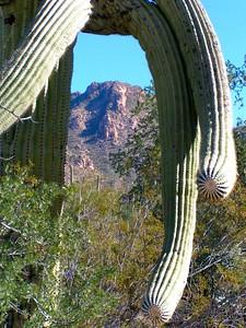 saguaro nat park, dec 8, 2004i