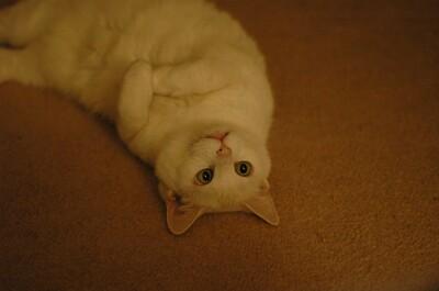 Upside down kitty!  hehe.