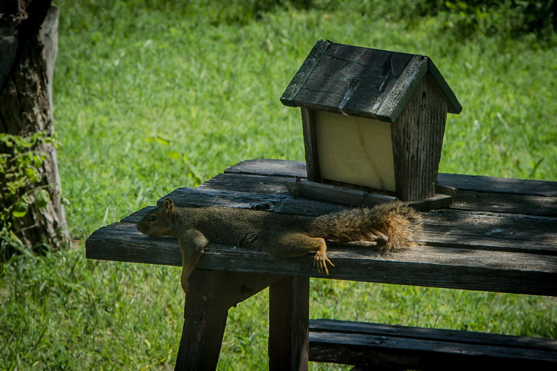 What would you do on a warm, sunny afternoon?  Photo taken in Dad's backyard on the picnic table Grandpa built.<br /> Photo © Cindy Clark