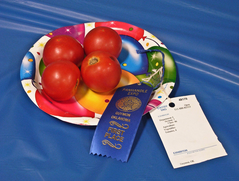 Good enough to eat!  Prize winning tomatoes at Texas County Fair, Guymon, Oklahoma.<br /> Photo © Cindy Clark