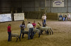 Sheep judging at the Texas County Fair in Guymon, Oklahoma.<br /> Photo © Carl Clark
