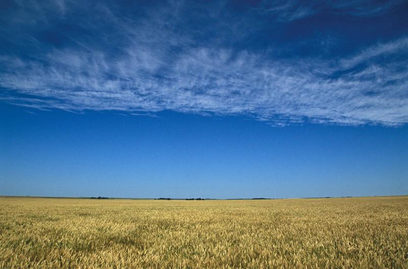 Amber waves of grain near Russell, Kansas.<br /> Photo © Carl Clark