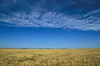 Amber waves of grain near Russell, Kansas.<br /> Photo © Carl Clark