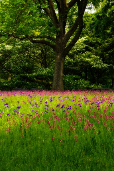 An Impressionistic look at the Missouri Botanical Garden in St. Louis.<br /> Photo © Carl Clark