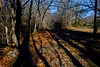 Long autumn shadows near Maeystown, Ilinois.<br /> Photo © Carl Clark