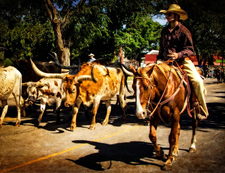 Longhorn cattle open the Pioneer Days parade in Guymon, Oklahoma.<br /> Photo © Cindy Clark