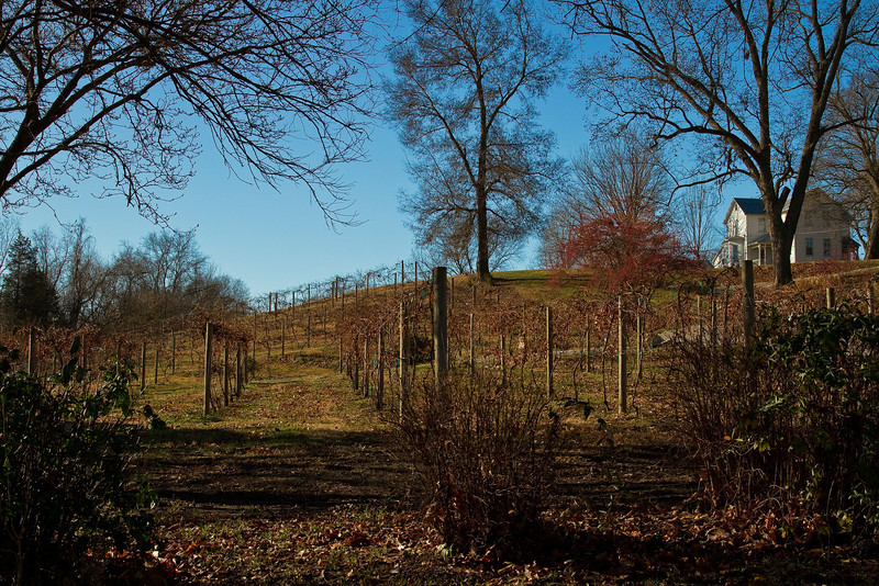 Did you know that Missouri has lots of vineyards & wineries?! Photo © Cindy Clark