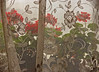 Geraniums seen through a lace curtain in Clayton, New Mexico.<br /> Photo © Cindy Clark