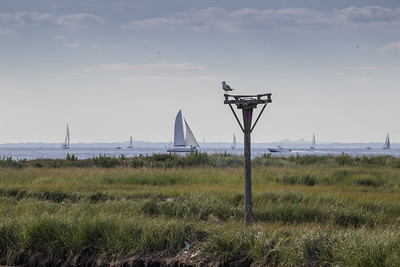 Sailboats on Raritan Bay