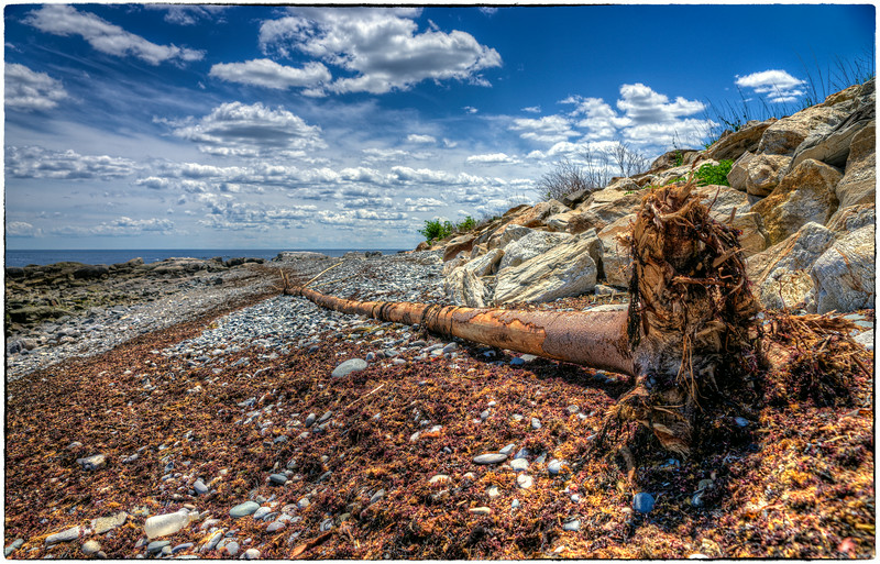 """Washed Up Tree"""