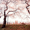 <h2>Spring Blossoms Overlooking the Central Park Reservoir - New York City</h2> - By Vivienne Gucwa   On Spring mornings, the world hangs in sleepy stasis.  Trees, adorned with blossoms as soft as winter's first snow, use their branches to gracefully conduct the world's awakening in a daily symphony at dawn.  ---  I am admittedly a night person. I have tried for years to trick my stubborn body into accepting a different biological time-clock to no avail.   However, on days when I am carefully trying to get myself to accept the mornings as a friend and not a foe, I am always amazed at how differently the world appears especially during certain times of the year like springtime. On a perfectly cloudy Spring day in Central Park, it's as if the world is opens up its dewy eyes one by one as the city stretches out languidly for a few hours.  ---