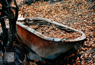 bathtub_spring copy