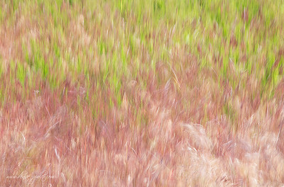 In-camera blur of the grasses
