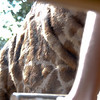 Yes - the giraffe is THAT close - in fact he was sniffing the top of Steven's legs.