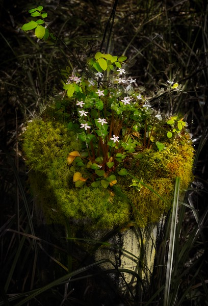 Nature's own container art!<br /> Photo © Cindy Clark
