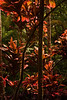 As fiery as the place they call home - Hawaii Tropical Botanical Gardens.<br /> Photo © Cindy Clark