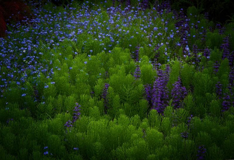 Dreamy scene at Kubota Gardens, Seattle. Photo © Cindy Clark