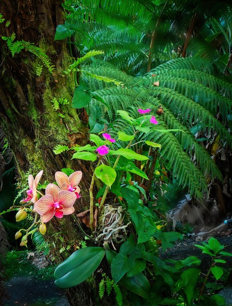 Orchids on the big island of Hawaii.<br /> Photo © Cindy Clark