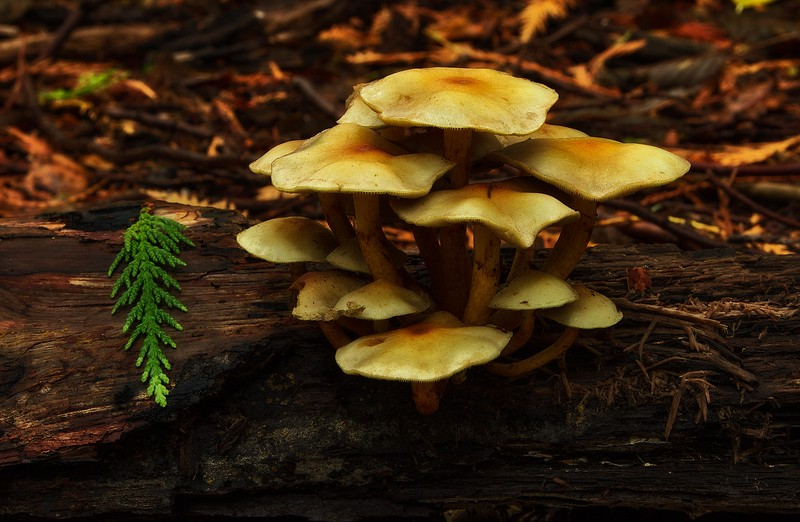 I can't resist mushroom shots!  This was taken on our hike on the Sunshine Coast, B.C. in September.<br /> Photo © Cindy Clark