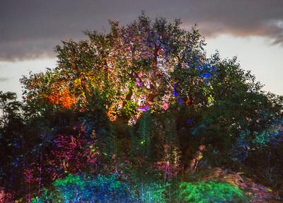 2017 - Rivers of Light show, Disney Animal Kingdom, FL
