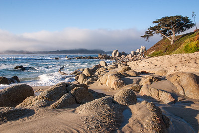 2008 - Shoreline and cypress, Monterey