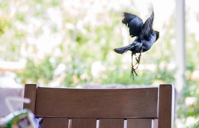 2017 - Bird not being photographed, Walt Disney World, Florida