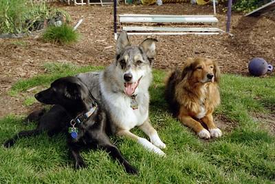 2005 - Dogs in my yard (Casey, Tika, Jake)