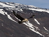 Skuas flying over the Adelie penguin colony