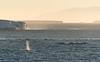Minke whales near Cape Adare, Antarctica