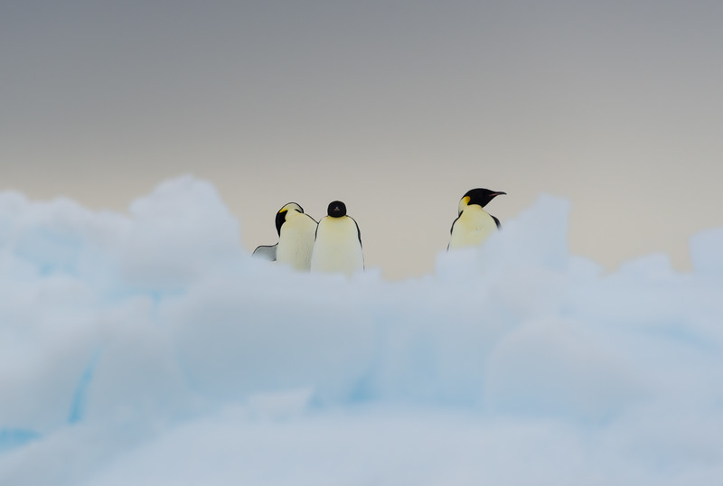 Emperor penguins in the Bay of Whales, Antarctica