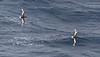 Sea birds in the sub-Antarctic region