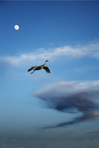 Crane with moon, vertical, New Mexico
