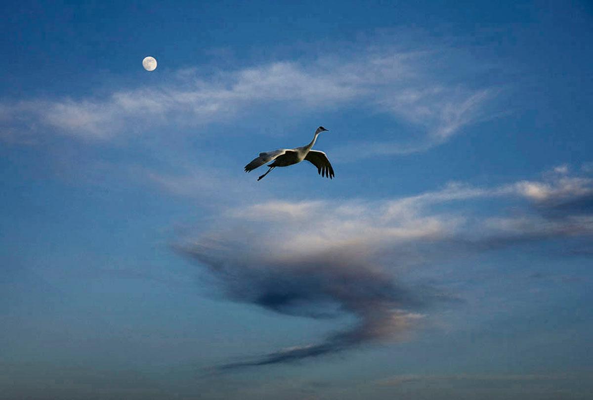 Crane with moon, horizontal, New Mexico