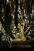 Statuary at the Bonaventure Cemetery in Savannah.<br /> Photo © Cindy Clark