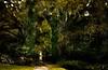 A scene from the gardens at Middleton Plantation near Charleston.<br /> Photo © Cindy Clark