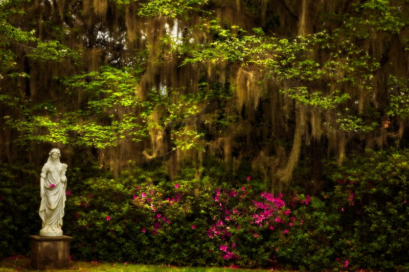 We visited the Middleton Plantation near Charleston. The gardens are the oldest landscaped gardens in America, dating back to 1741.<br /> Photo © Cindy Clark