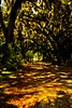 The path beneath the forest canopy in Savannah.<br /> Photo © Carl Clark