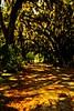 The path beneath the forest canopy in Savannah.<br /> Photo © Carl Clark