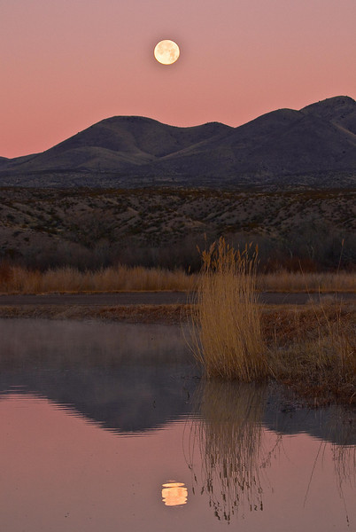 Moonset on a still evening at Bosque del Apache.<br /> Photo © Cindy Clark