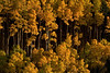 The last touch of the setting sun lights up the aspens near Santa Fe.<br /> Photo © Cindy Clark